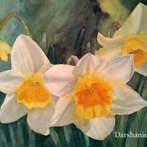 darshanie sukhu watercolor daffodil darshan