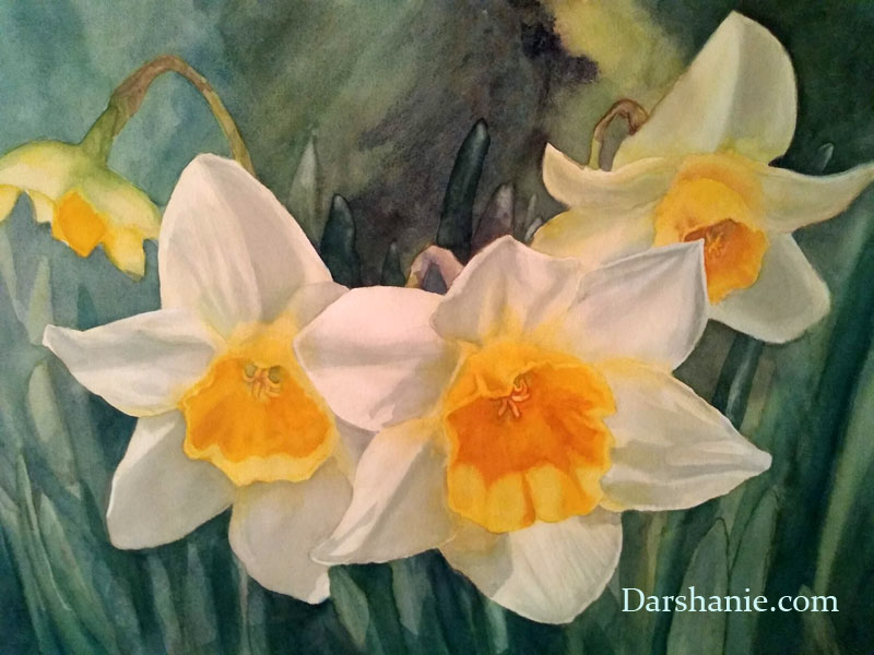 darshanie sukhu watercolor daffodil darshan