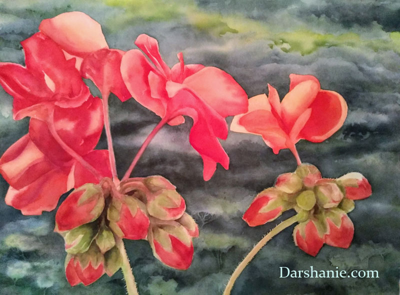 darshanie sukhu watercolor geranium assisi
