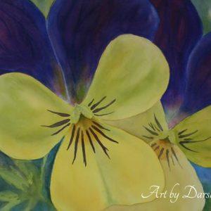 darshanie sukhu watercolor pansy bright