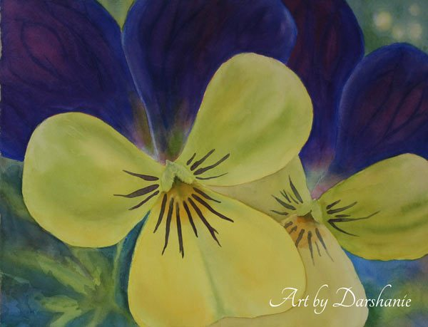 darshanie sukhu watercolor pansy bright