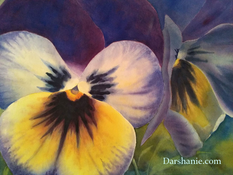 darshanie sukhu watercolor pansy cozy