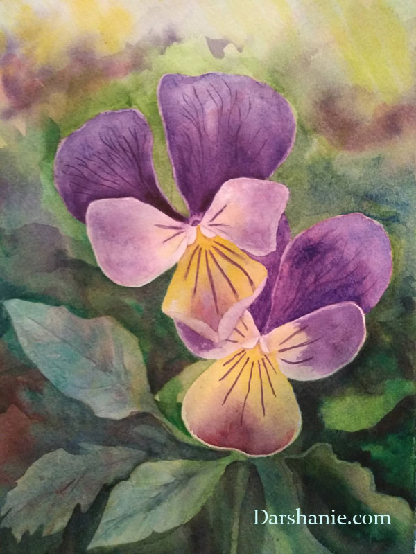 darshanie sukhu watercolor pansy sweetness