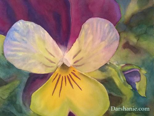 darshanie sukhu watercolor pansy bold