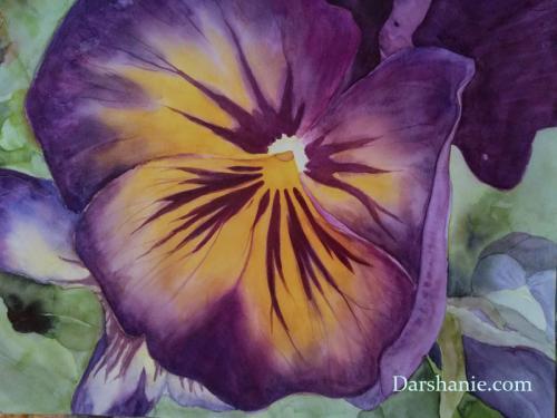 darshanie-sukhu-watercolor-pansy-hermit