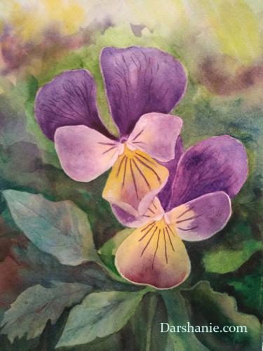 darshanie sukhu watercolor pansy sweetness